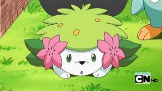 Pokemon S13E11